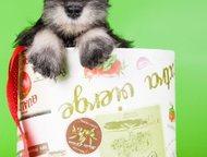 Ангарск: Щенки миниатюрного шнауцера В питомнике Викториас Скилл продаются щенки Миниатюрного шнауцера (Цвергшнауцера) :  - Маленькая (30 – 35 см) порода, ко