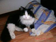 Ангарск: Кошка пропала в Ангарске в районе 93 квартала Переехали из Иркутска в Ангарск. Кошка пропала в Ангарске в районе 93 квартала. Взрослая, пушистая. Если