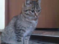 Арзамас: отдам в добрые руки Отдам в добрые руки котят 6, 5 мес, два мальчика и одна девочка.