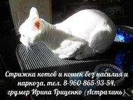 Астрахань: Стрижка кошек без насилия и наркоза Вам надоела вездесущая шерсть в квартире?  У вас шерсть на:  - ковре  - диване  - одежде  - кухонном столе  - в к