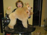 Стрижки собак в Гатчине Профессионал-парикмахер с многолетним опытом, предоставляет свои услуги для ваших питомцев. Качественно, ответственно: с любов, Гатчина - Услуги для животных