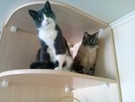 Кемерово: потерялся кот Друзья, срочно нужна Ваша помощь! Потерялся мой кот. Зовут Гриша. Он на фото серый с зелеными глазами. Выбежал из квартиры! пр. Шахтеров