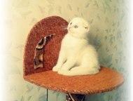 Вязка Молодой вислоухий шотландец (1, 5 года) приглашает ПРЯМОУХИХ кошечек своей породы на вязку.   Кот имеет ветеринарный паспорт со всеми необходимы, Краснодар - Вязка кошек (случка)