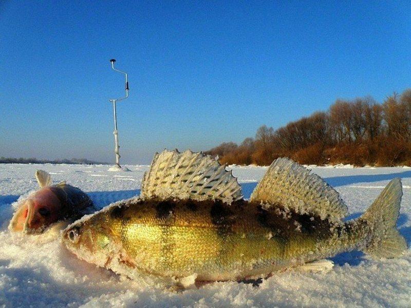 рыбалка на красноперку в ленинградской области