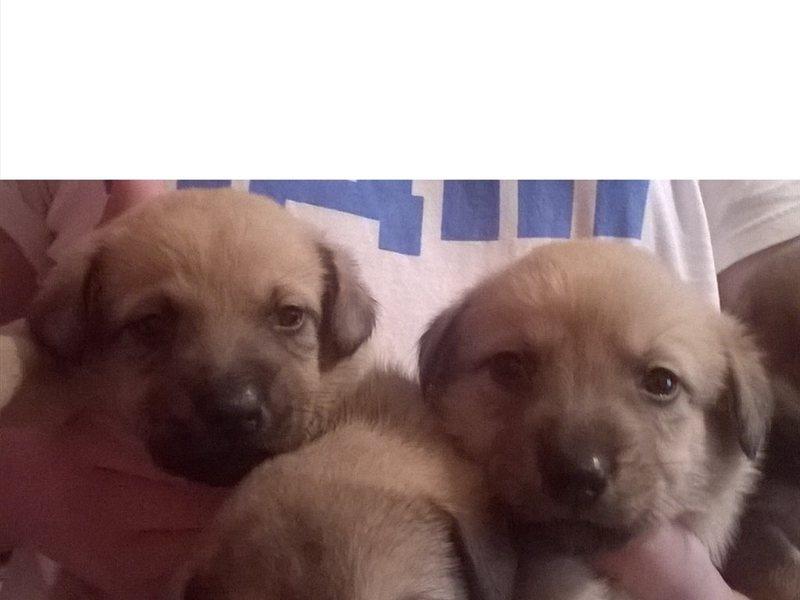 Продажа маленьких собачек в красноярске