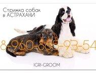 Стрижка собак и кошек в Астрахани, опытный грумер Стрижки породные и модельные, практичные домашние и гигиенические. Мытьё, расчёсывание, стрижка когт, Астрахань - Стрижка собак на дому недорого