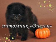 Продаю померанского шпица Продаю кукольного мини-мальчика, померанского шпица. Редкого чёрного окраса. У малыша отличная шерсть, великолепный, задорны, Рязань - Продажа собак,  щенков