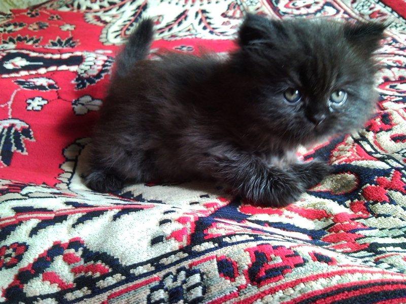 вшиванию застёжки купить или даром персидскиого котенка чита кита продажа