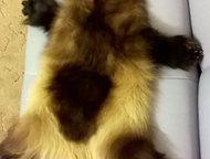 продам шкуру росомахи Продам выделанную зимнюю шкуру росомахи, когти на месте, Салехард - Разное
