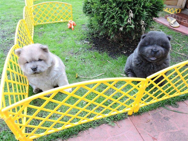 цены на собак в самаре ККМ-КАССА