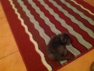 Тольятти: Отдам котят или кошку в добрые руки У нашей Муси родилось 3 котёнка - 2 рыженьких, 1 серый. Котята без блох, глистов, клещей. Оставили бы у себя, но с