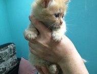 Волгоград: Котят отдам Отдам котят в добрые руки. Им месяц. Все голубоглазые красавицы.