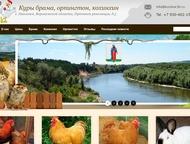 Продажа породистых кур брама, орпингтон, кохинхин Живя в сельской местности, многие хозяева задумывались над тем, что выращивать и содержать на своем , Воронеж - Птички, клетки